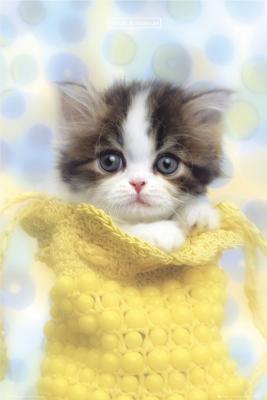 søde katte billeder